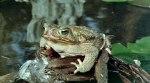 frogsfrogs